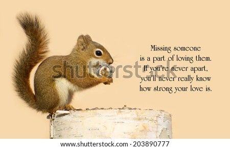 Inspirational quote on love by Helen Fielding with a young male squirrel holding on lovingly to a tiny antique picture frame with a picture of his sweetheart in it. - stock photo