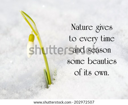 Inspirational quote on nature by Charles Dickens with a snow drop flower poking out of the snow in the early Spring. - stock photo