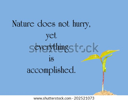 Inspirational quote on nature by Loa Tze with a lone seedling reaching for the sky. - stock photo