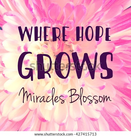 Inspirational Typographic Quote - Where Hope Grows Miracles Blossom - stock photo