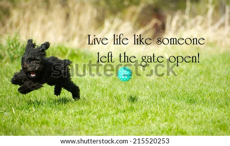"Inspirational words ""Live life like someone left the gate open"" with an adorable toy poodle enjoying life to the fullest, happily ripping around in the summer.  - stock photo"