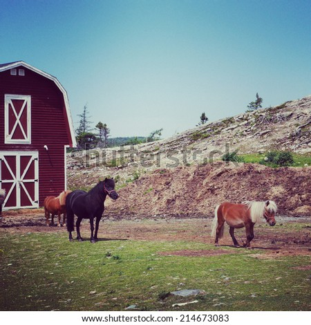instagram of miniature ponies at farm - stock photo