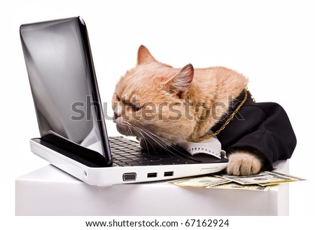 intelligent cat for the laptop.Animal in the academic robes on a white background.financial success.New Year. - stock photo