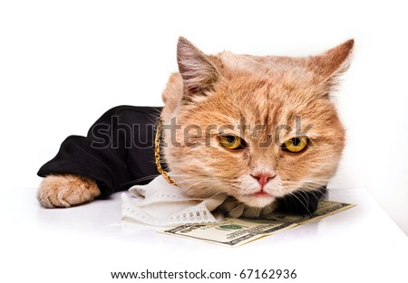intelligent cat for the money.Animal in the academic robes on a white background.financial success.New Year. - stock photo