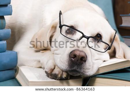 Intelligent Dog - stock photo
