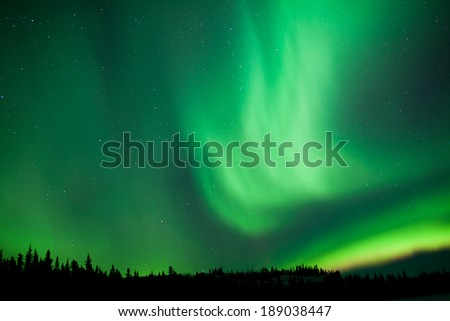 Intense green northern lights, Aurora borealis, on night sky with stars over boreal forest taiga, Yukon, Canada - stock photo