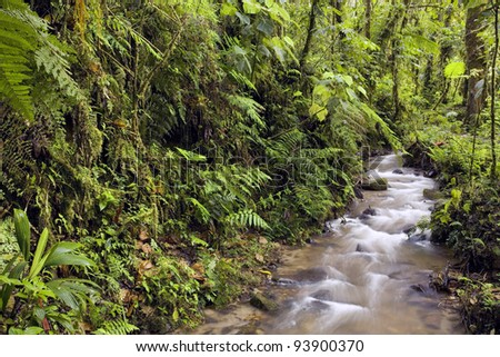 Interior of cloudforest at 2,200m altitude in the Ecuadorian Andes - stock photo