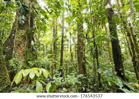 Interior of tropical rainforest in the Upper Amazon Basin in Ecuador - stock photo