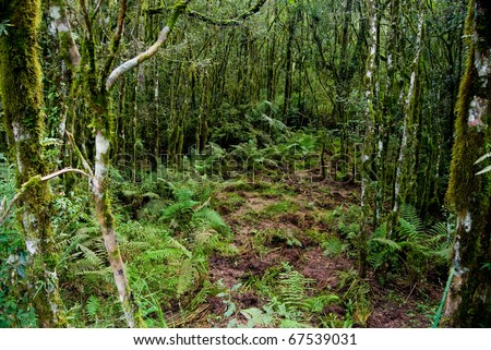 Internal view of the Atlantic forest vegetation on southern Brazil. - stock photo
