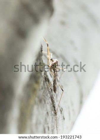 invisible insects on tree - stock photo