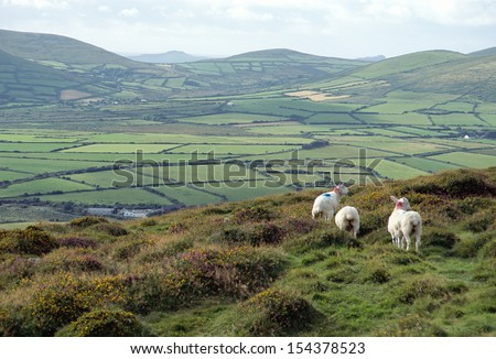 Ireland landscape of white sheeps and overview of green countryside - stock photo