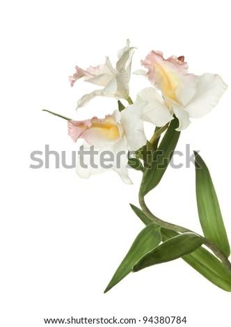 Iris flower isolated on white background - stock photo