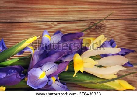 iris flower on white wooden background - stock photo