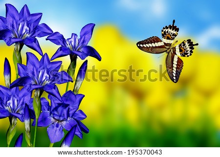 iris flowers and butterfly - stock photo