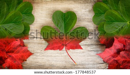Irish-Canadian conceptual piece constructed out of real leaves depicting a  merging of Irish and Canadian insignia - the maple leaf and shamrock.  - stock photo