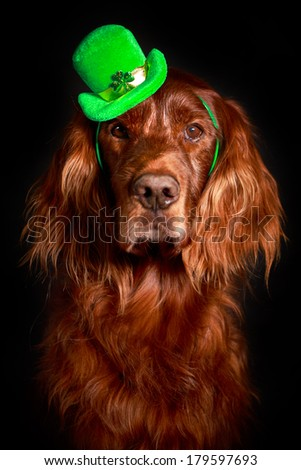 irish dog in st.patrick hat - stock photo