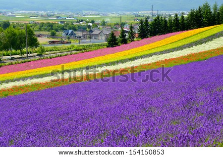 Irodori field, Tomita farm, Furano, Japan. It is the famous and beautiful flower fields in Hokkaido - stock photo