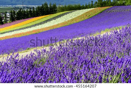 Irodori field, Tomita farm, Nakafurano, Hokkaido, Japan - stock photo