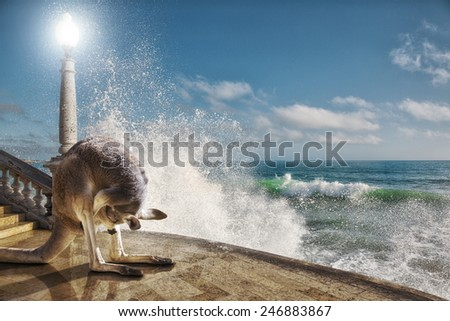 irreal image: Kangaroo with his nose in the bag next to a wave breaks on the floor. abstract photomanipulation - stock photo