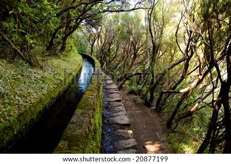 Irrigation canal levada in magical forest, Madeira Island, Portugal - stock photo