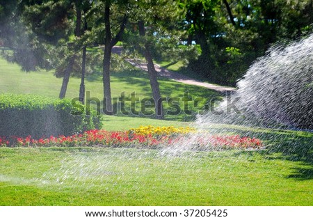 Irrigation of the flowers - stock photo