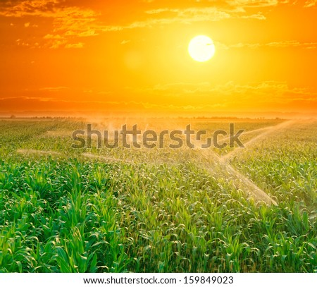 Irrigation pivot on the corn field at summer sunset. - stock photo