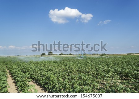 irrigation system over a ripe cotton field - stock photo
