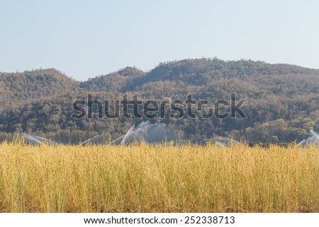 Irrigation system watering a crop of soy beans - stock photo