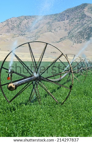 Irrigation wheel line watering an alfalfa field. - stock photo