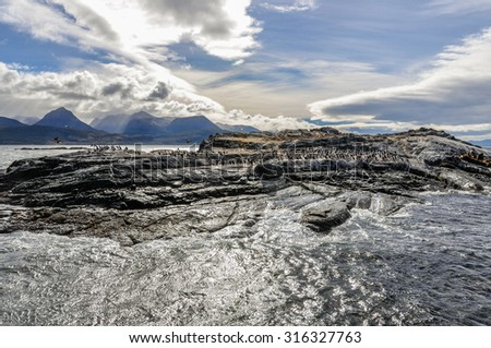 Island of seals and sea lions, Beagle Channel, Ushuaia, Argentina - stock photo
