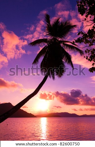 Island Pink Palm - stock photo