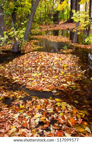 Islands of Leaves Surrounded by Water - stock photo