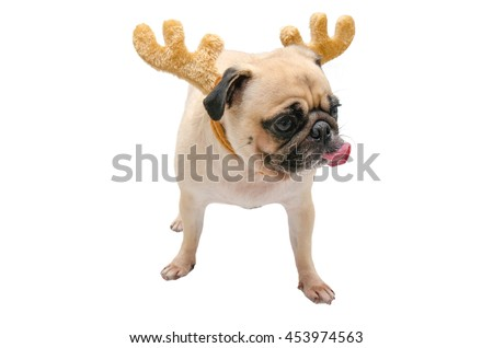 Isolate close-up face of puppy pug dog tongue sticking out wearing Reindeer antlers for christmas and new year party with clipping path - stock photo