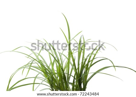 isolate Fresh spring green grass - stock photo