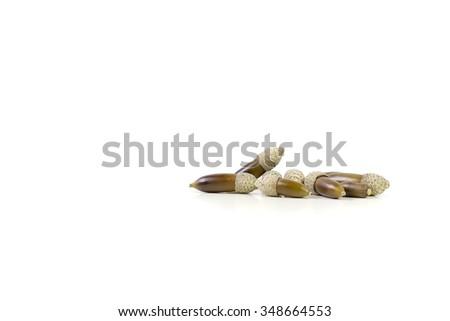 Isolated acorns (Quercus ilex) - stock photo