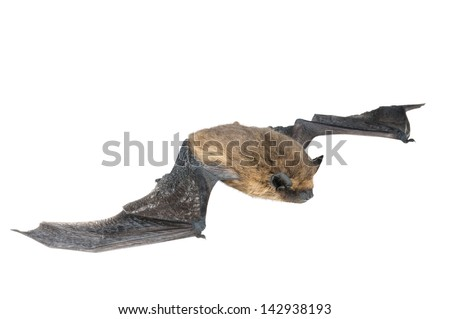 isolated bat with wings on white background - stock photo