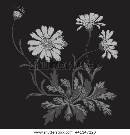 Isolated blooming meadow flower form print natural outline floral black spring ornament monochrome petal organic leaf holiday botanic summer graphic blossom drawing gray daisies chamomile stem garden - stock photo