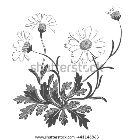 Isolated blooming meadow flower form print natural outline floral white spring ornament monochrome petal organic leaf holiday botanic summer graphic blossom drawing black daisies chamomile stem garden - stock photo