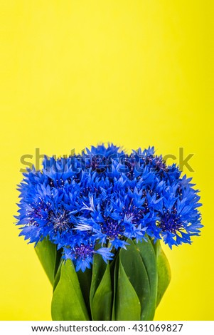 Isolated blue flowers bouquet with green leaves on bright yellow background.  - stock photo