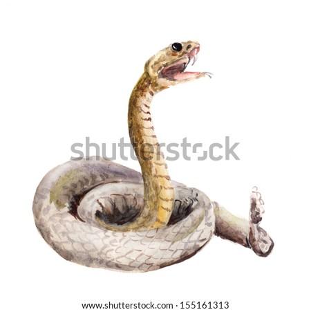 Isolated cascabel snake - stock photo