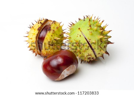 isolated Chestnut on white background - stock photo