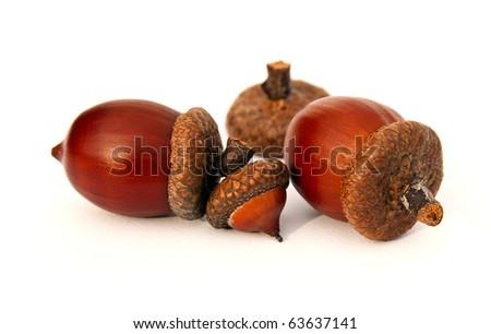 Isolated clean acorns - stock photo