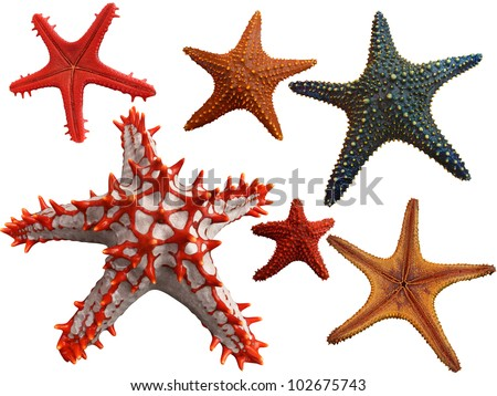 Isolated Collection of different starfish - stock photo