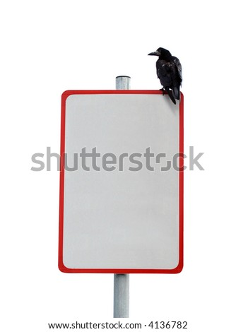 Isolated Crow on blank poster sign - stock photo
