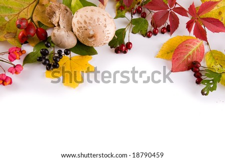 isolated different leaves - stock photo