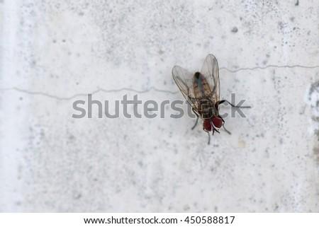 isolated fly on the white background macro close up - stock photo