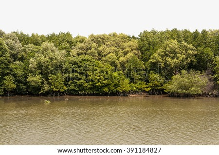 Isolated, Forrest of green trees on mountainside with river and bank on with background. - stock photo