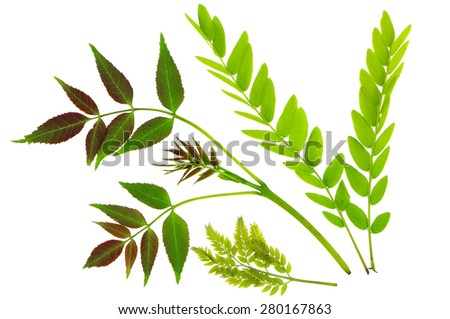 Isolated green leaves on a white background - stock photo