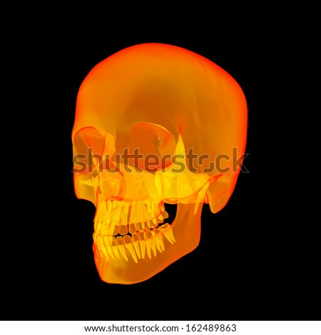 Isolated human x ray skull on black background - side view - stock photo