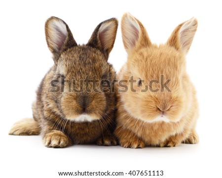 Isolated image of a two bunny rabbits. - stock photo